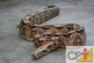 Criação de serpentes para produção de veneno: alimentação