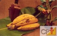 Produção de banana: plantio