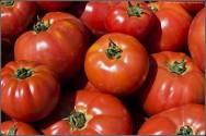 Tomate orgânico contém 34 substâncias benéficas à saúde