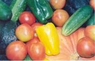 Agricultura orgânica é tendência que cresce no mercado brasileiro