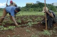 Aprenda Fácil Editora: MANEJO NATURAL DAS ERVAS INVASORAS NA AGRICULTURA ORGÂNICA