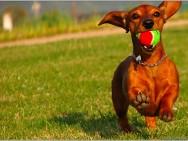 Animais de estimação também precisam de treinamento físico