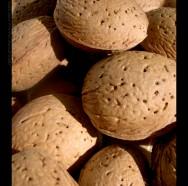 Amêndoas, castanhas e pinhão podem diminuir risco de câncer de fígado