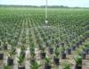Óleo de palma vai abastecer mercado interno e externo