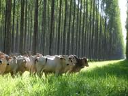 Começa hoje o IV Simpósio de Agropecuária Sustentável