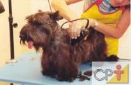 Banho e tosa em cães: a tosa
