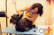 O tosador deve ser muito paciente com o animal