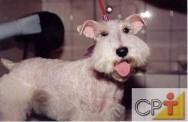 Banho e tosa em cães: supervisão