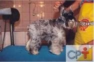 Banho e tosa em cães: o ouvido dos cães