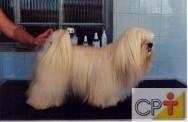 Banho e tosa em cães: tosa higiênica