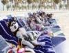 Pet shops inovam e oferecem os mais variados produtos e serviços de luxo aos animais