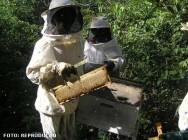 Apicultor extrai mel usando menos fumaça