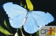 A vida das borboletas é muito curta, em média de duas semanas