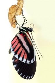 A metamorfose transforma a lagarta num dos mais belos seres da natureza – a borboleta.