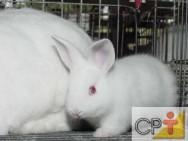 Criação de coelhos: diferenças entre coelho e lebre