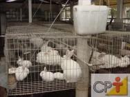 Criação de coelho: ração farelada