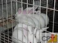 Criação de coelhos: ração granulada