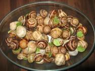 Degustar a carne de escargots é uma questão de paladar