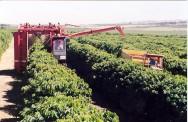 Minas Gerais possui renda agrícola superior à média nacional