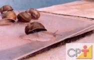 Criação de escargots: como remover a baba