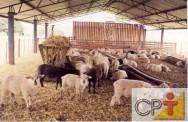 Produção de cordeiros: alimentação dos ovinos