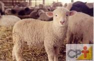 Produção de cordeiros: comportamento dos animais