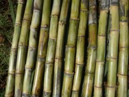 Governo define subsídio para produtores de cana-de-açúcar