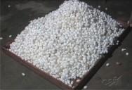 Bicho-da-seda: produção do fio da seda