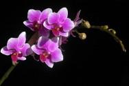 Saiba como cuidar de orquídeas em casa