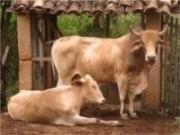Em uma propriedade rural, o administrador tem muitas opções de trabalho ele pode escolher entre diversas atividades.