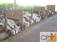 Cabras leiteiras: rotinas de manejo