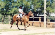 Equoterapia: a terapia com cavalos