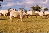 Agropecuária cresce 4,9% no último trimestre