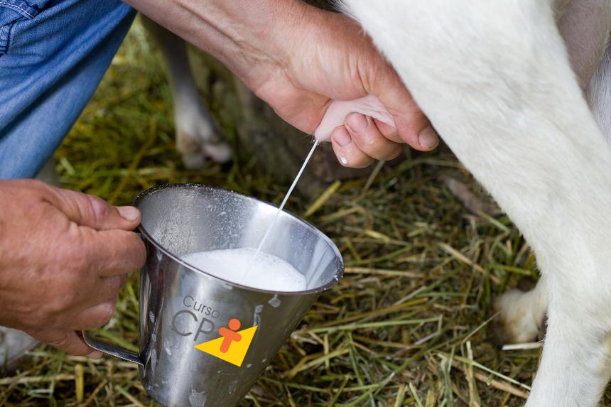 Cabras leiteiras: ordenha   CPT