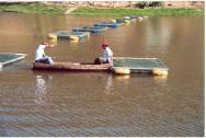 Governo lançará plano para estimular a piscicultura