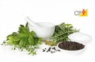Princípios ativos das plantas medicinais: ações terapêuticas