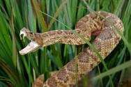 Criação de cobras para extração de veneno é uma aventura vantajosa