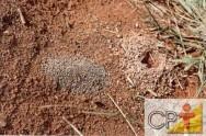 Formigas cortadeiras: colônia