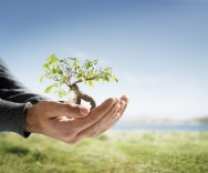 Conservação ambiental: conteúdo previsto para o Ensino Fundamental I