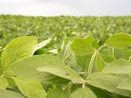 Safra de alimentos deve crescer 2,8%