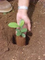 Aprenda Fácil Editora: O PLANTIO ALEATÓRIO COMO MODELO DE RESTAURAÇÃO FLORESTAL