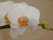 Ikebana é uma arte japonesa de arranjos florais, também conhecida como Kado. Originária da Índia,  onde esses tipos de arranjos eram ofertados a Buda