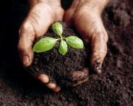 Aprenda Fácil Editora: A PREPARAÇÃO DO SOLO NA AGRICULTURA ORGÂNICA