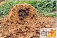 Controle de cupins em áreas agrícolas: ninhos