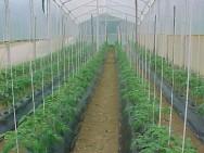Feira da Agricultura Familiar apresenta novas tecnologias