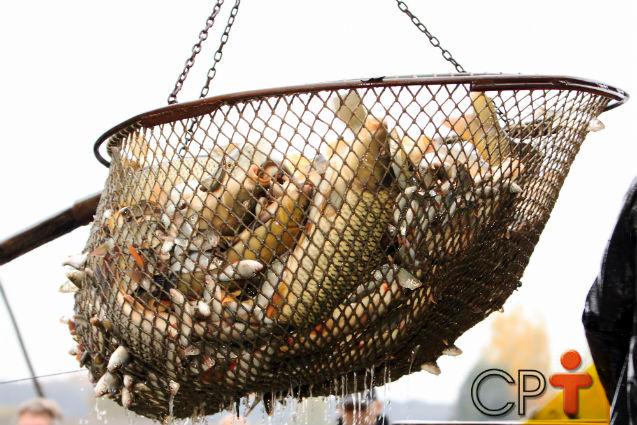 Conheça detalhes sobre a criação de peixes   Artigos Cursos CPT