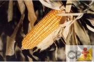 Agricultura de precisão: conceito