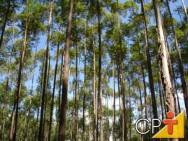A preservação da madeira tem um papel importantíssimo no desenvolvimento e na consolidação dessa nova alternativa florestal