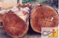 Secagem e tratamento de madeira na fazenda: as dicotiledôneas