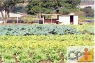 Horta caseira: vitaminas